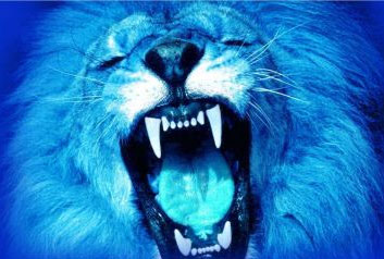 el leon azul: