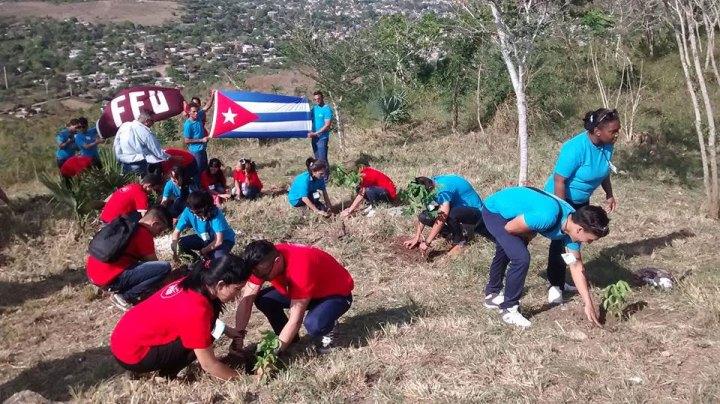 Estudiantes de la Universidad de Ciencias Médicas llegaron hasta la Loma de la Cruz y plantaron 90 árboles maderables en saludo al cumpleaños del Comandante. Foto: Yordanis Rodríguez Laurencio.