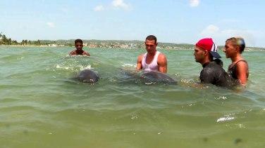 delfines-matanzas4