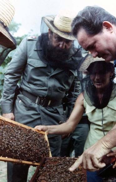 El Presidente de los Consejos de Estado y de Ministros, Comandante en Jefe Fidel Castro Ruz realiza recorrido por el Plan Apícola de Herradura. Pinar del Río, 31 de agosto de 1981.