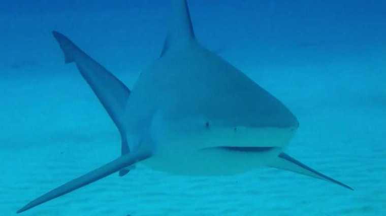 Los ataques de tiburones son extremadamente raros en las costas cubanas. Foto tomada de internet.