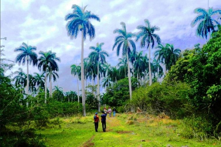 Detras de las palmeras se encuentra El Idilio. Foto: Lázaro David Najarro Pujol.