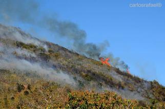 Incendio en la Loma de la Cruz sofocado gracias a la rápida intervención de los bomberos y el cuerpo de guardabosques. Foto: Carlos Rafael Díaz Borges.